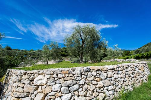 With Uliva Gis it  begins the age of olive cultivation 4.0